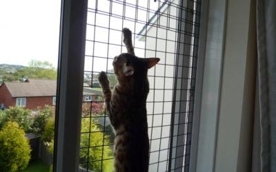 Siguran dom za mačića