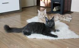 Imamo macice – Leglo R-3
