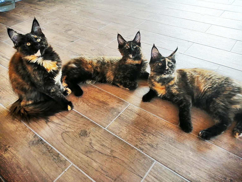Mačići koji traže svoj dom