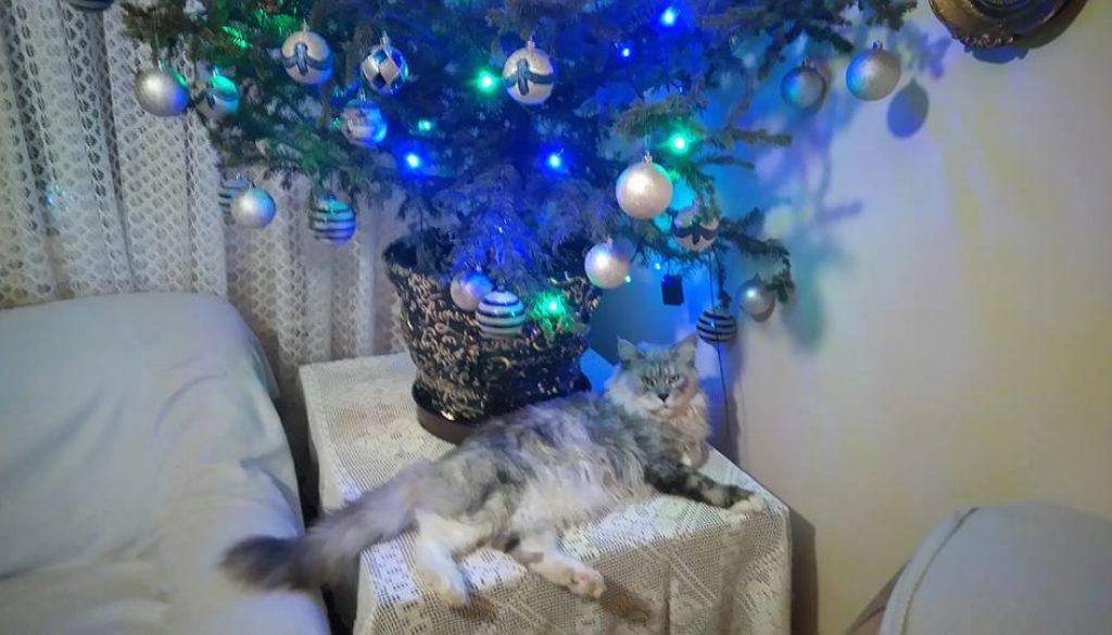 Božićni vilenjaci