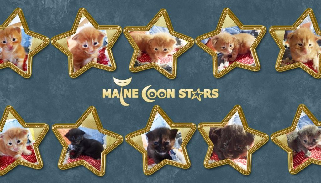 """Predstavljamo Vam naše zvijezdice – Leglo """"S"""""""