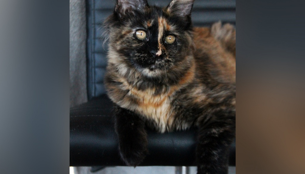 Mačići u potrazi za novim domom